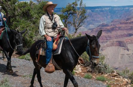 World Famous Mule Rides